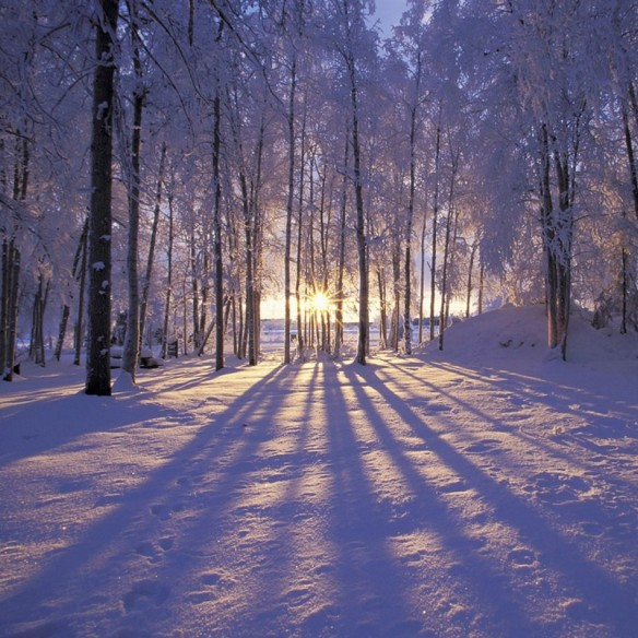 cropped-winter-forest-ipad-wallpaper1.jpg